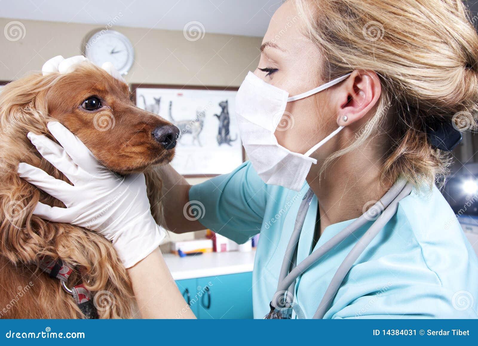 Doktorski weterynarz