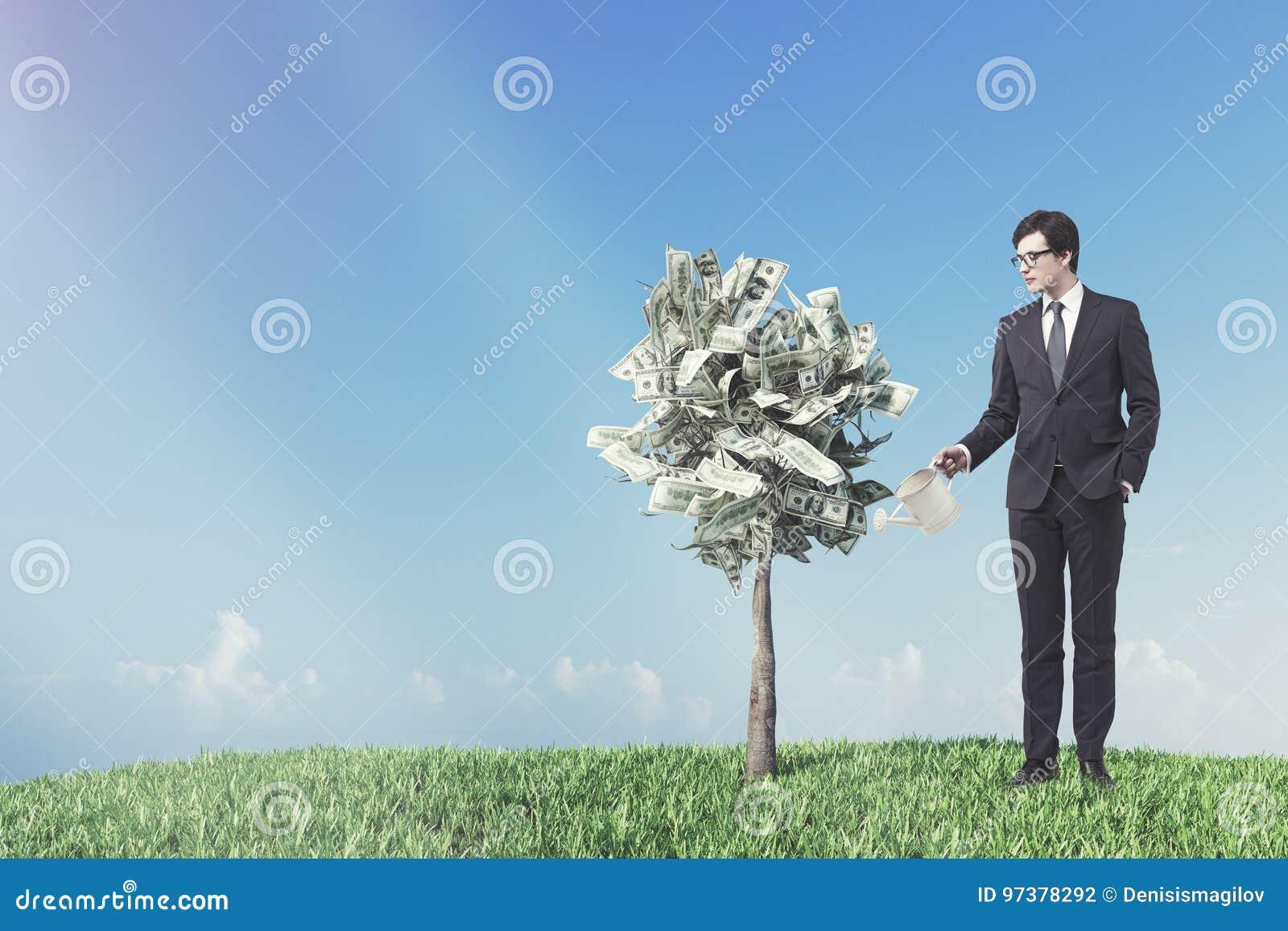 Dolarowy drzewo w garnku, łąka, biznesmen