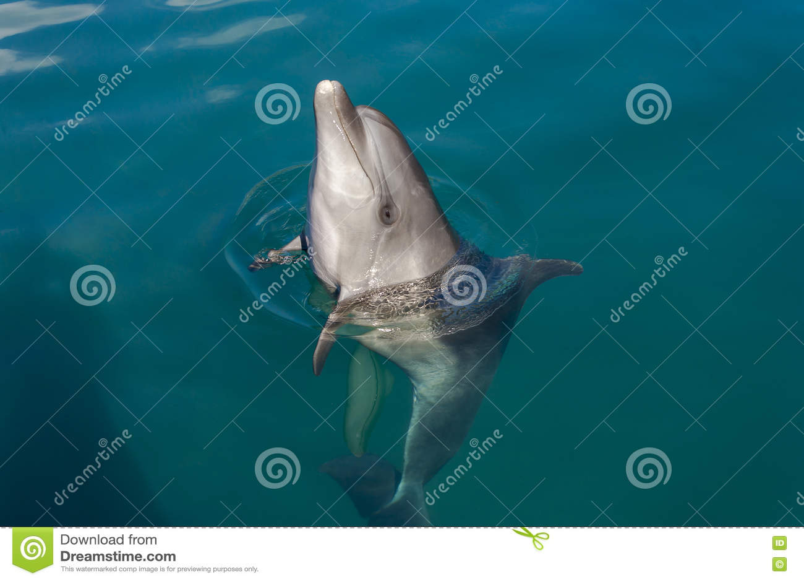 Dolfijn het spelen in het overzees