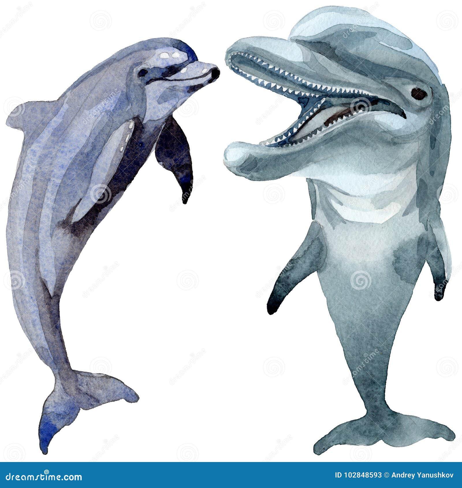 Dolfijn wilde zoogdieren in een geïsoleerde waterverfstijl