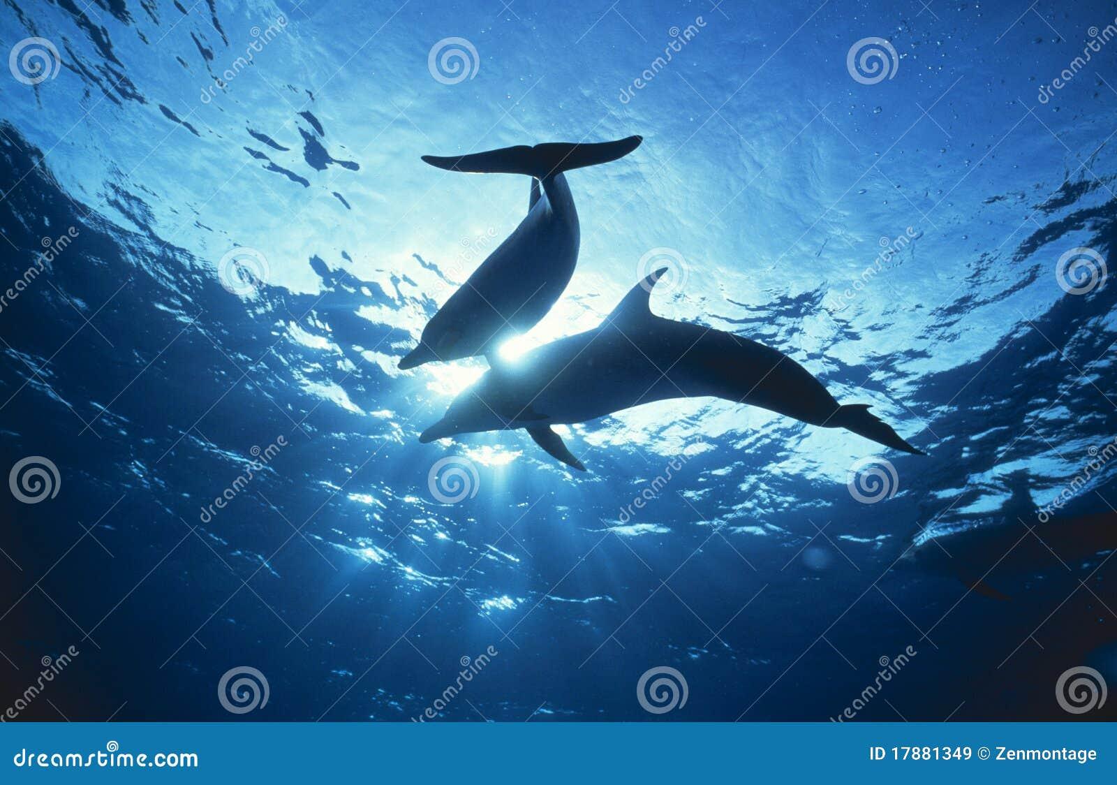 Dolfijnen dichtbij de Oppervlakte