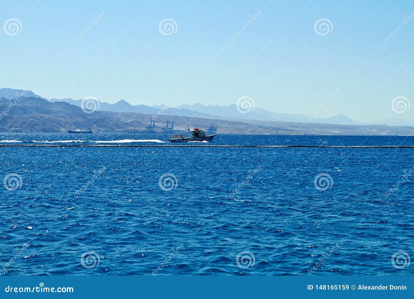 Dolfijnertsader op het Rode Overzees