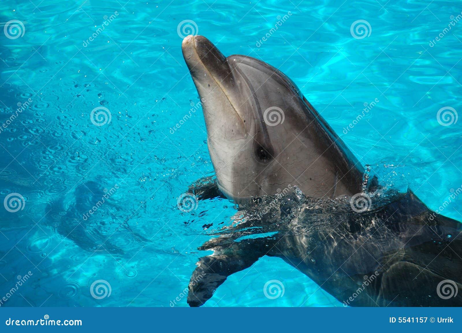 Dolfin boris