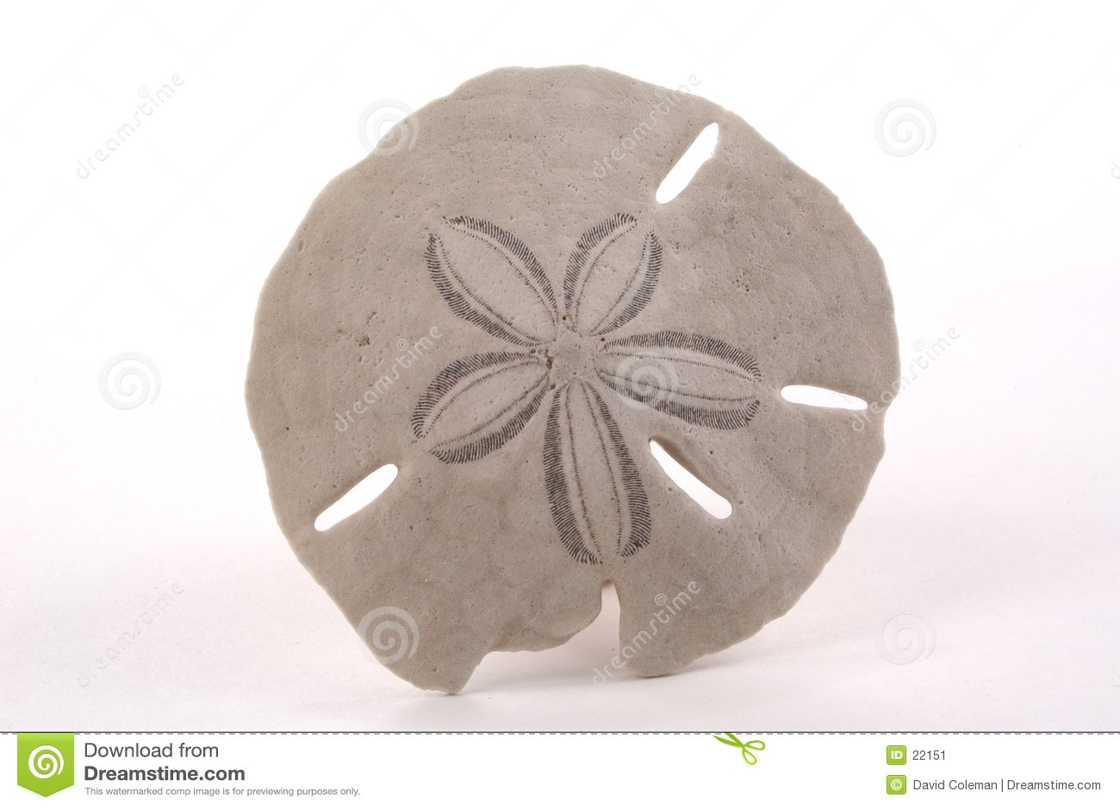 Dollaro di sabbia