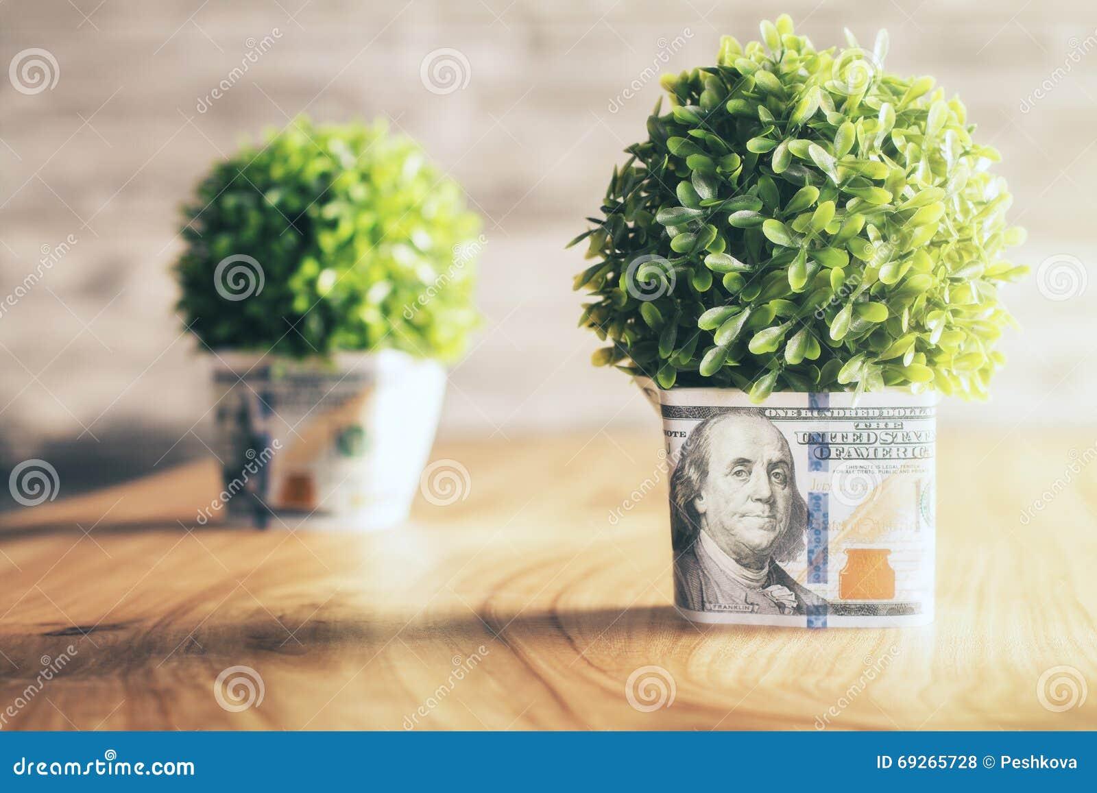 Dollarväxtkrukor