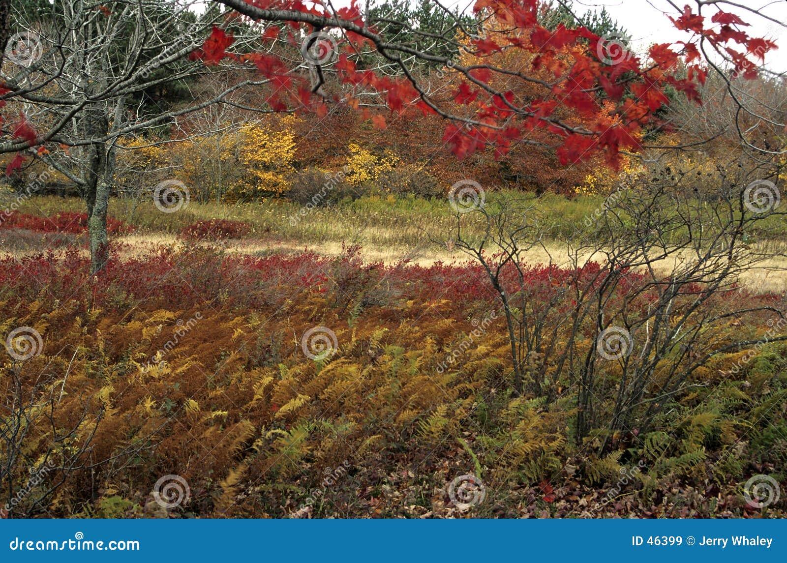 Dolly sceniczny chrzanić jesieni