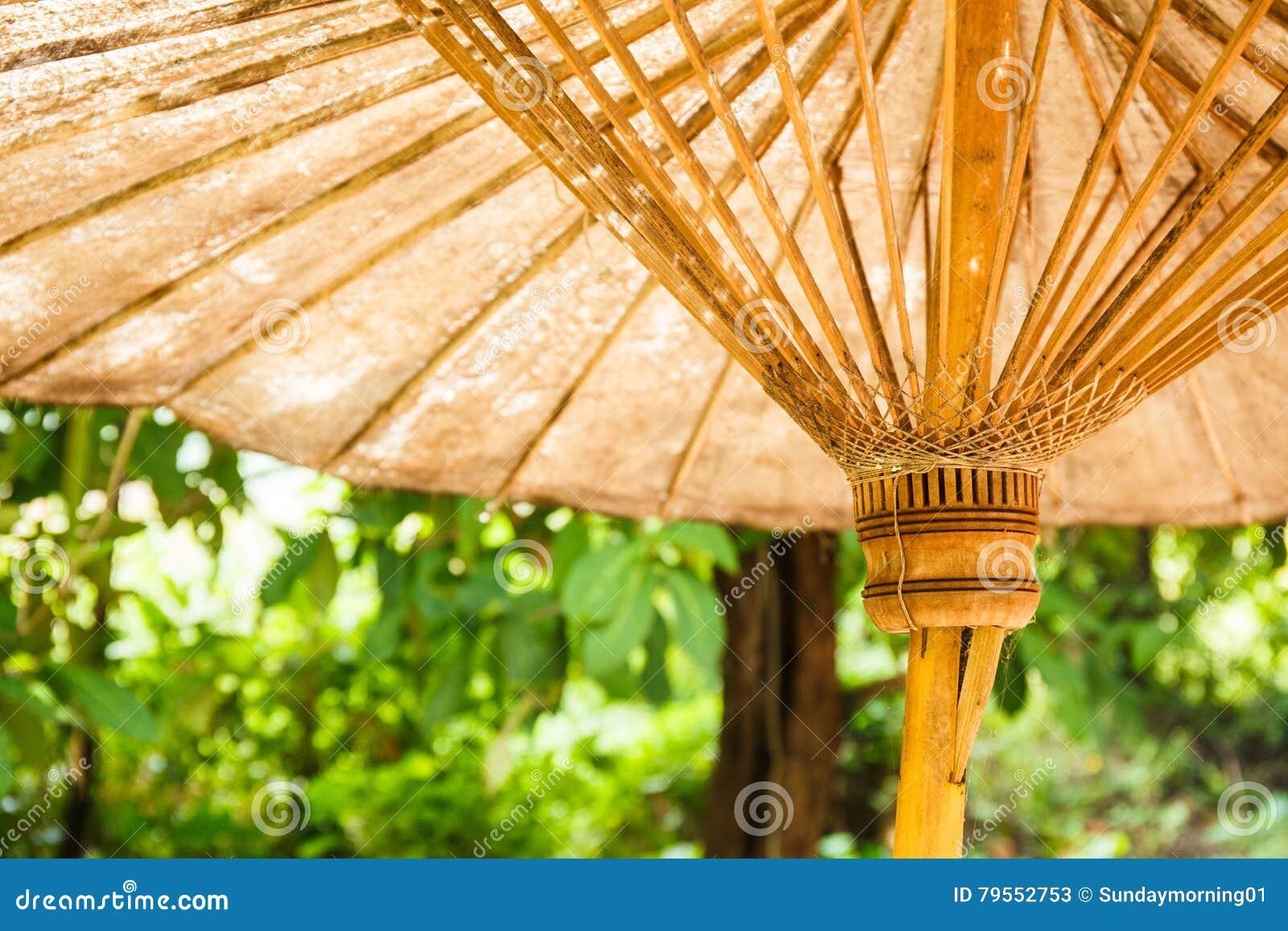 Dolny widok stary parasol i drzewo