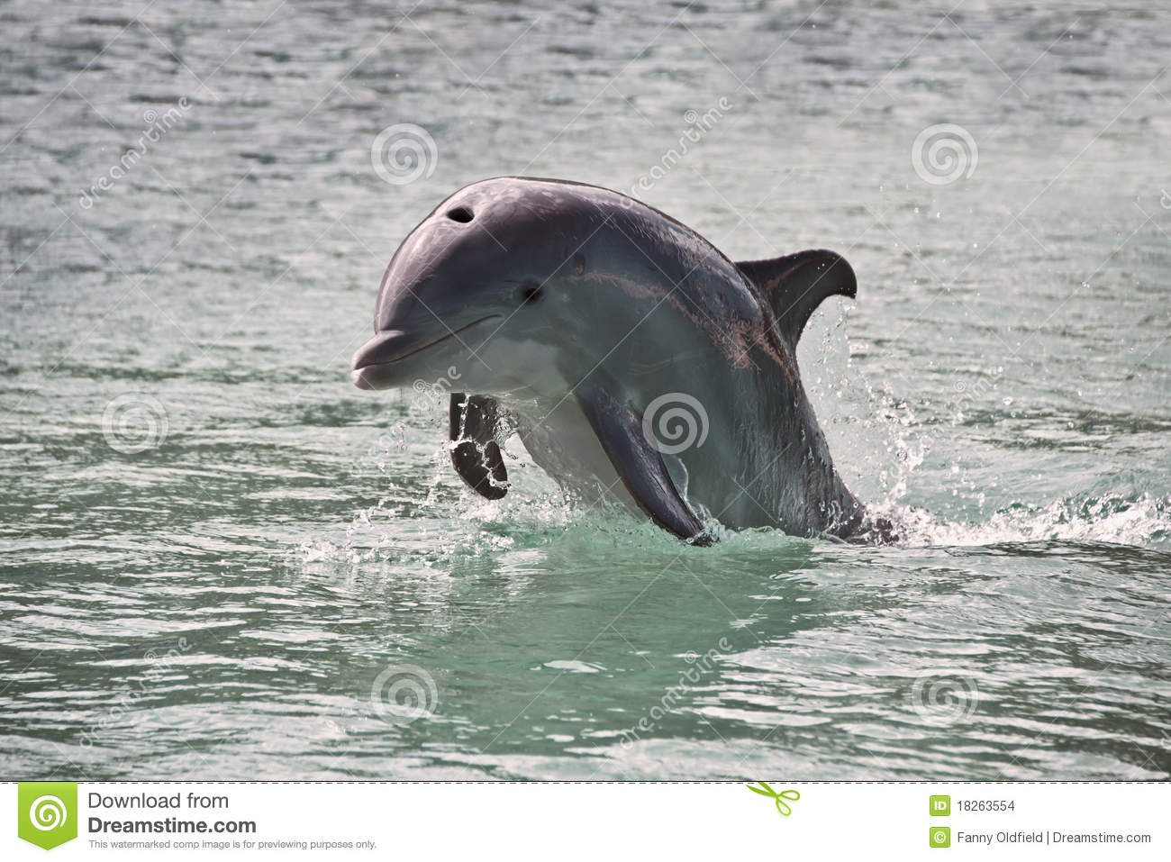 Dolphin Stock Images - Image: 18263554