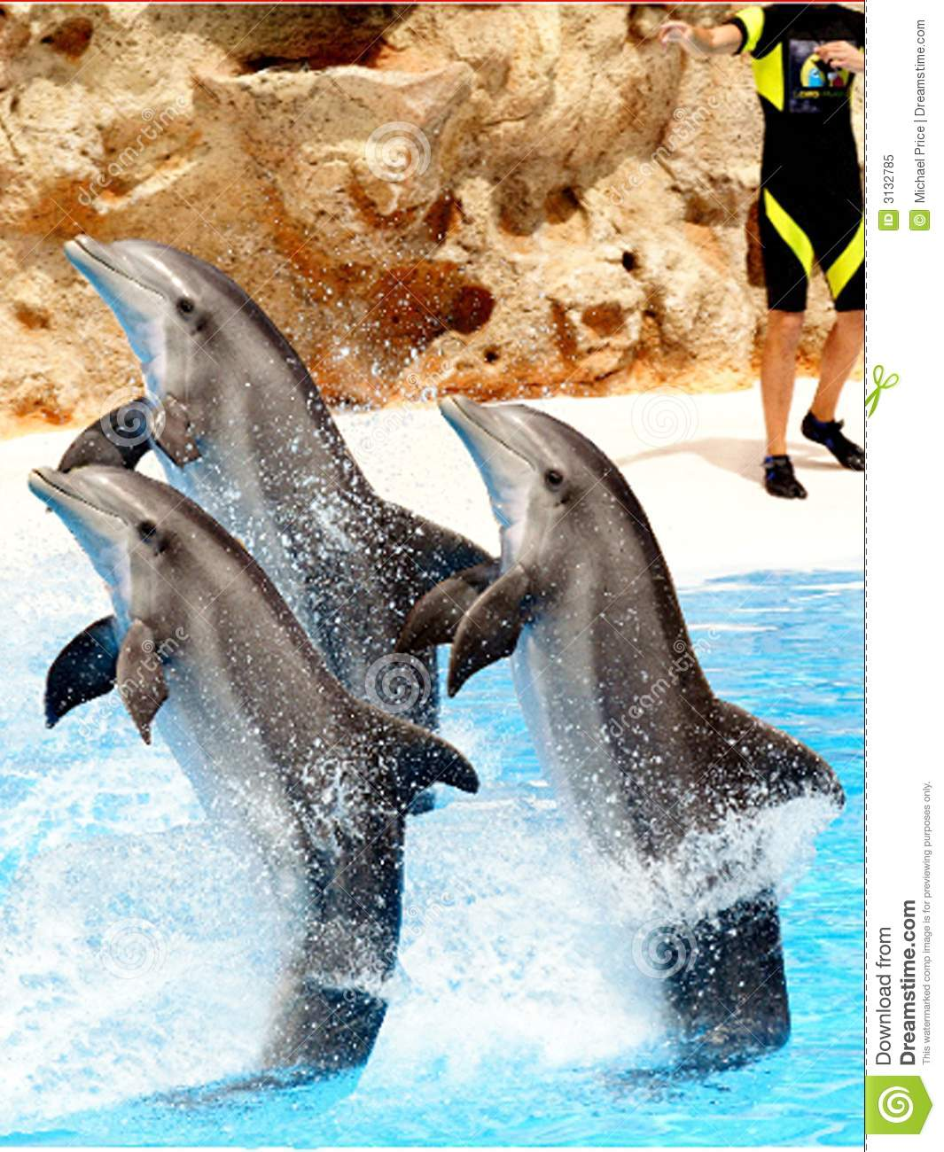 dolphin display