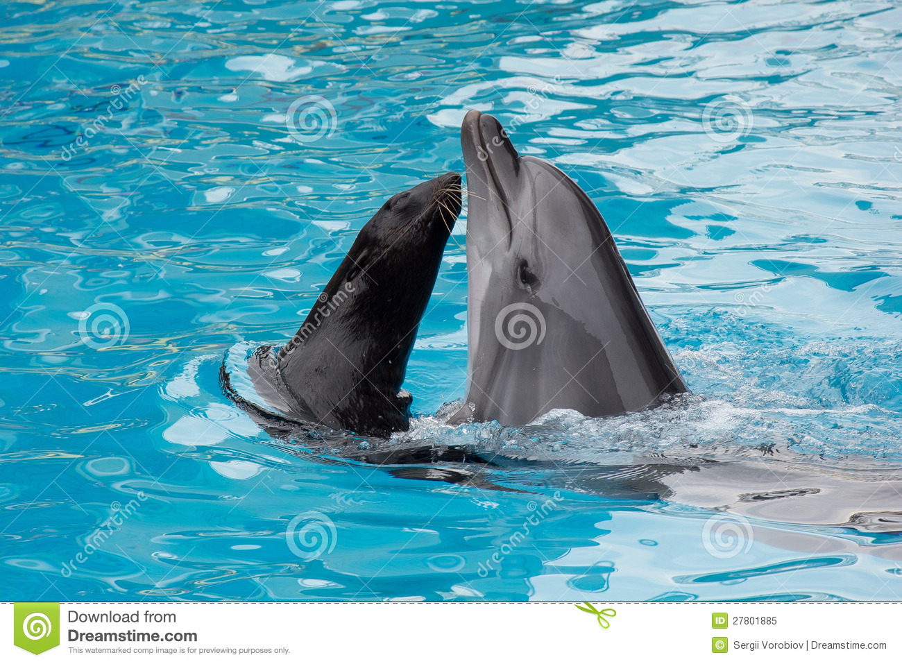 Dolphin and fur seal swim in the pool stock image image 27801885 for Poole dolphin swimming pool prices