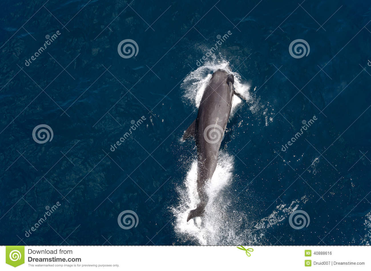 Dolphin Gaming
