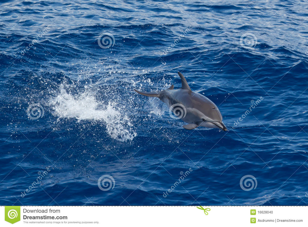 Download Dolphin jumping stock photo. Image of marine, ocean, jump - 16628040
