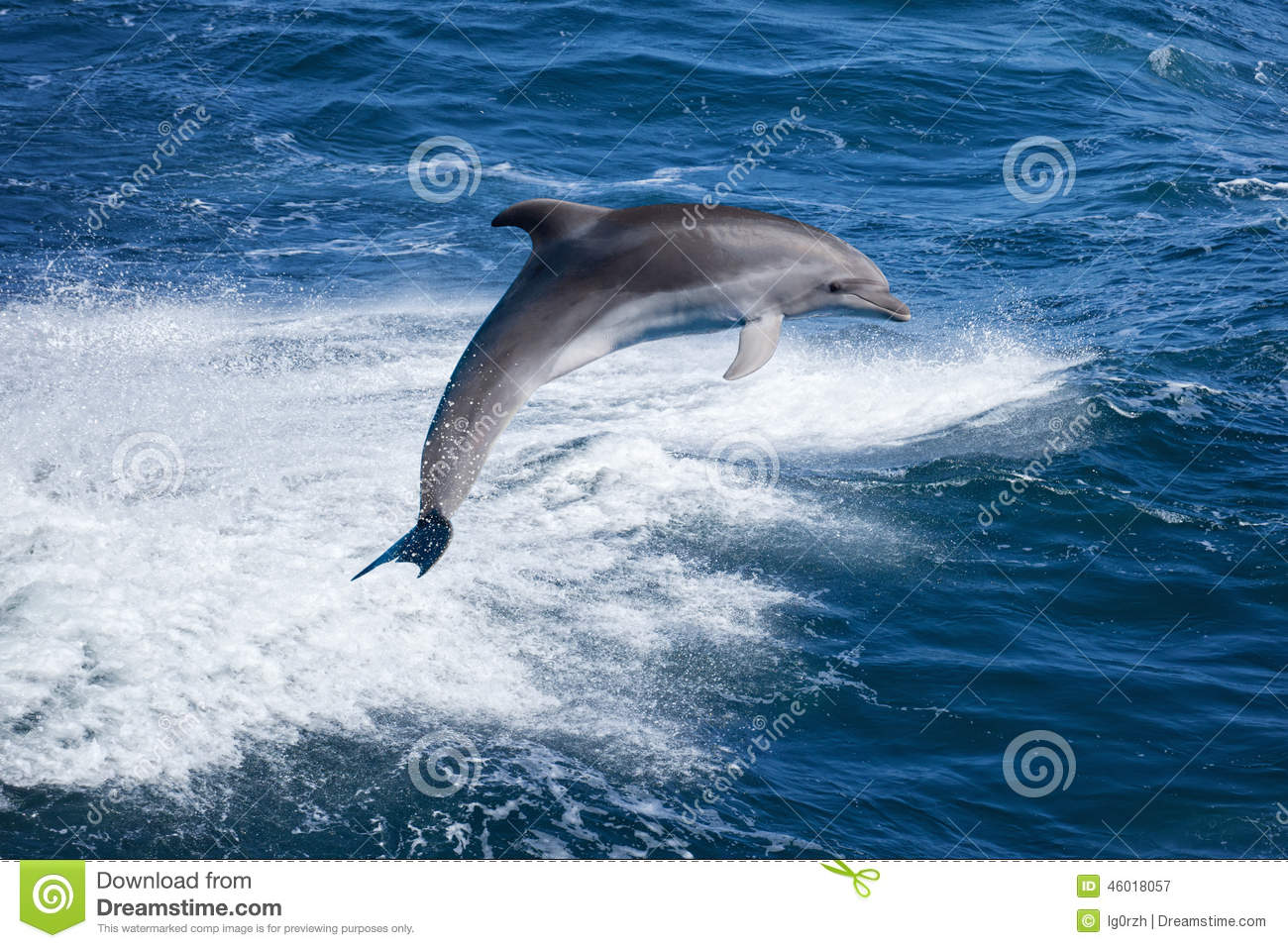 Download Dolphin jumping stock image. Image of ocean, wild, animal - 46018057