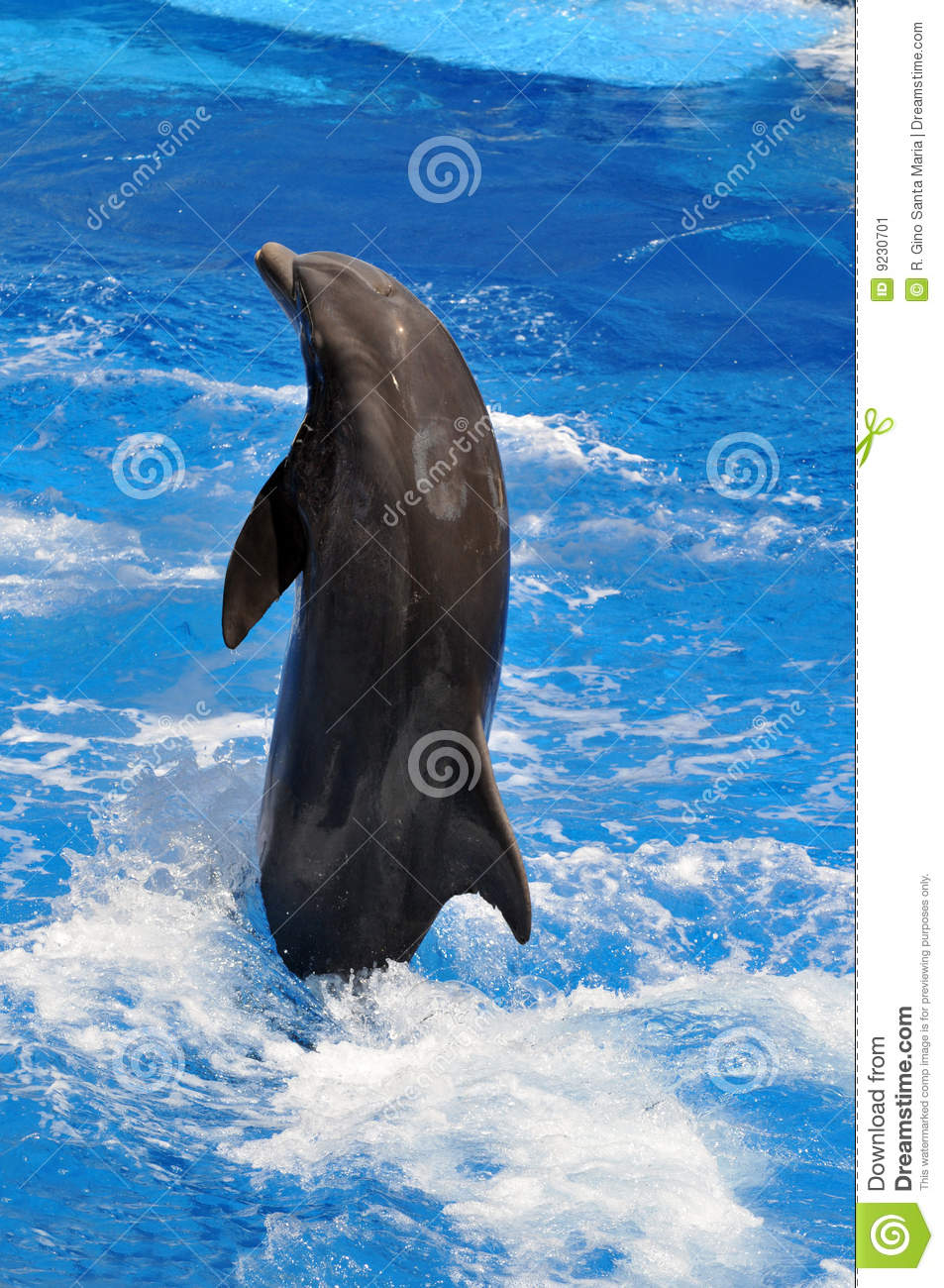 Dolphin Jumping Out Of Water Stock Image Image Of