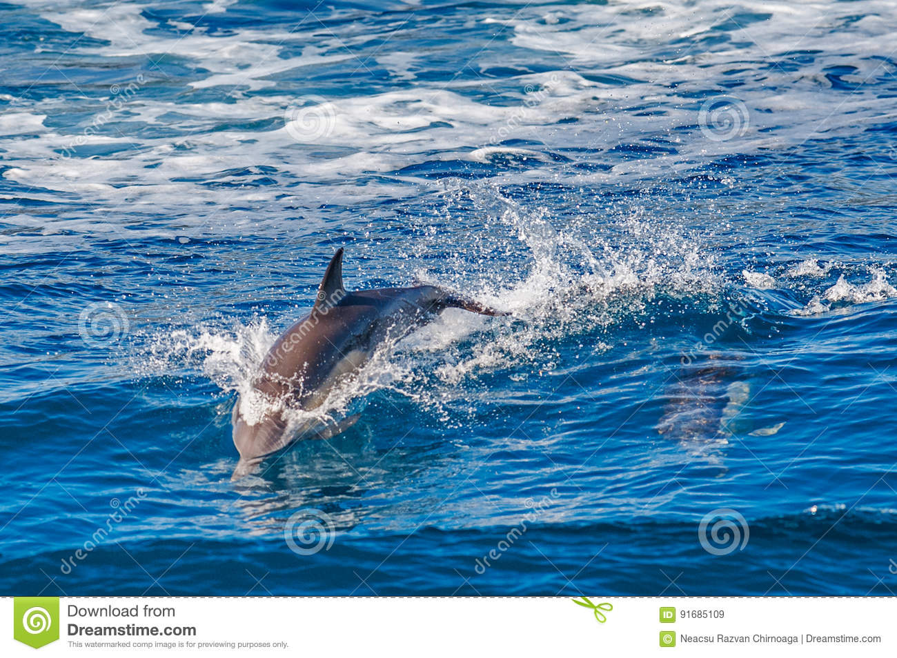 Download Dolphin jumping stock image. Image of elegant, aquatic - 91685109