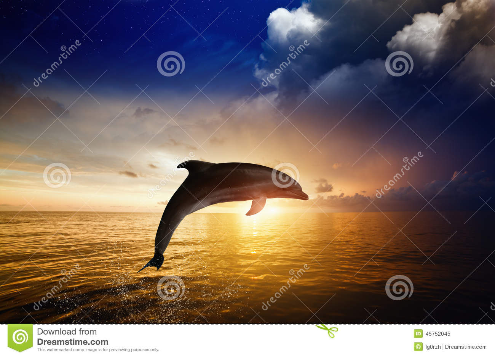 Dolphin Jumping Stock Image Of Horizon Wild Wildlife