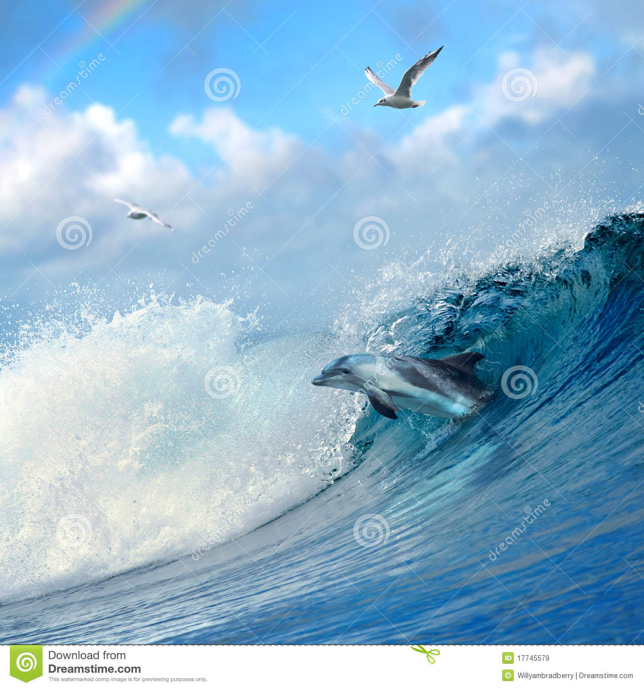 Dolphin leaping out from curly breaking ocean wave