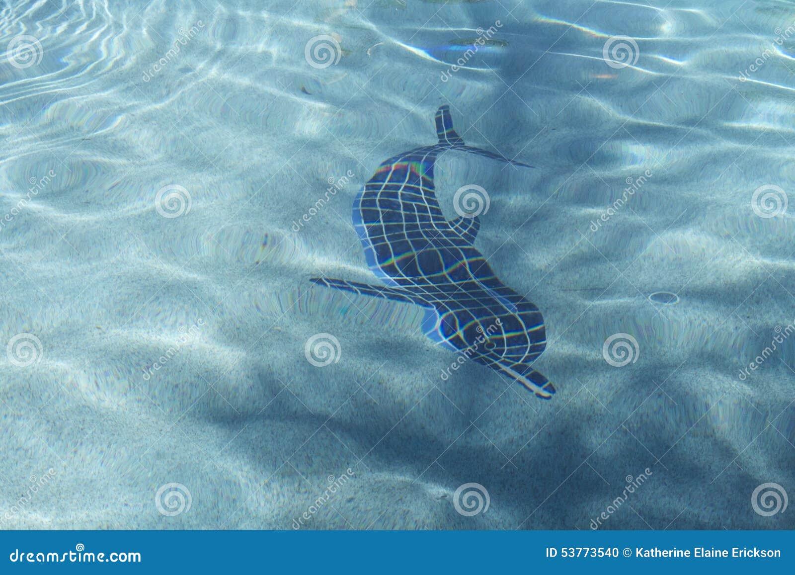 Dolphin Stock Photo Image 53773540