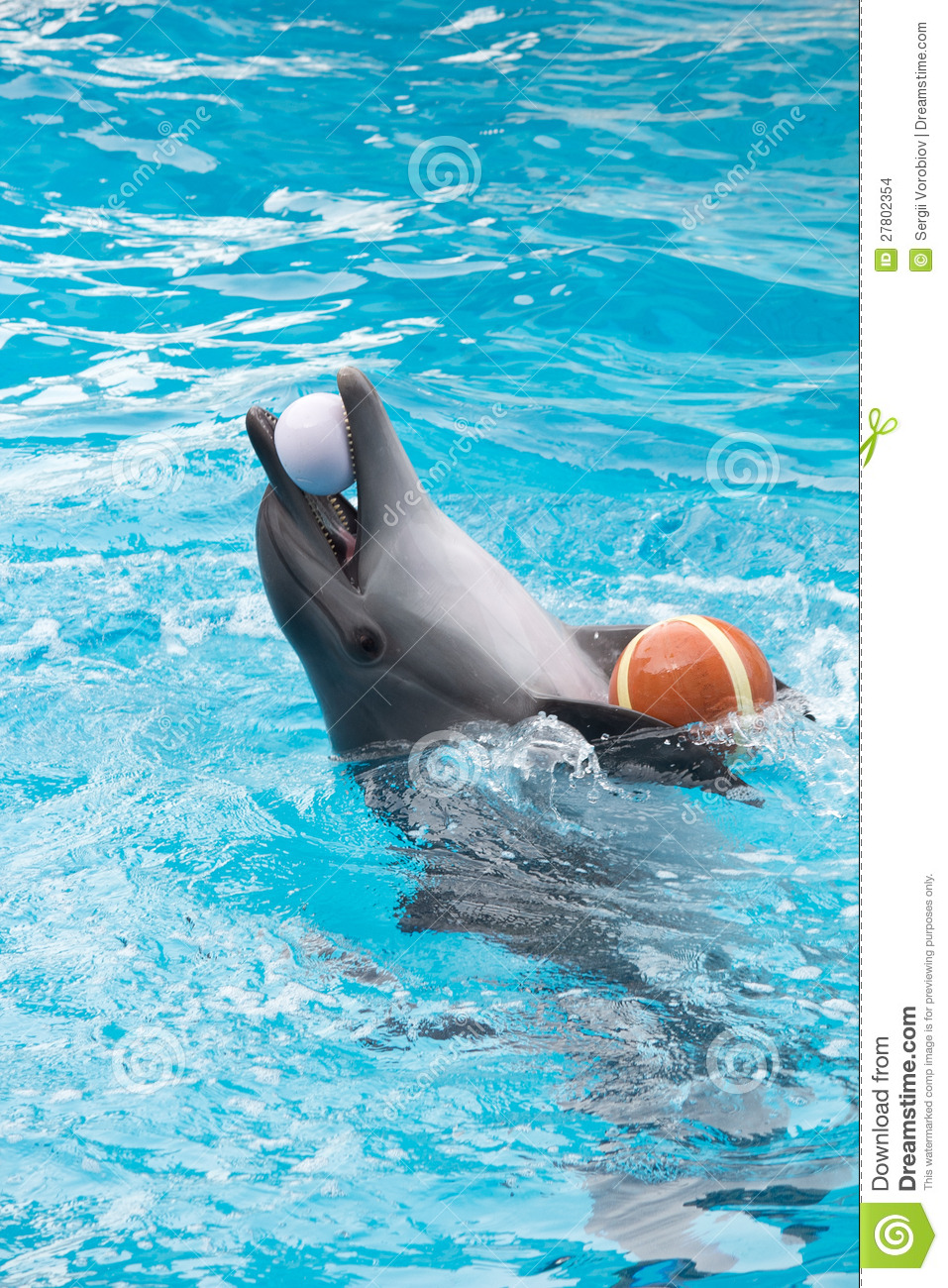Dolphin play in pool stock images image 27802354 for Poole dolphin swimming pool prices