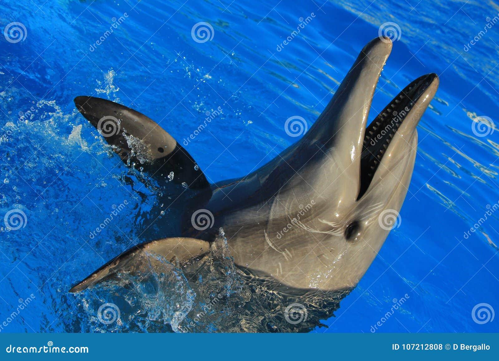 Dolphin playing at aquarium in baja california Los Cabos delfin nariz de botella