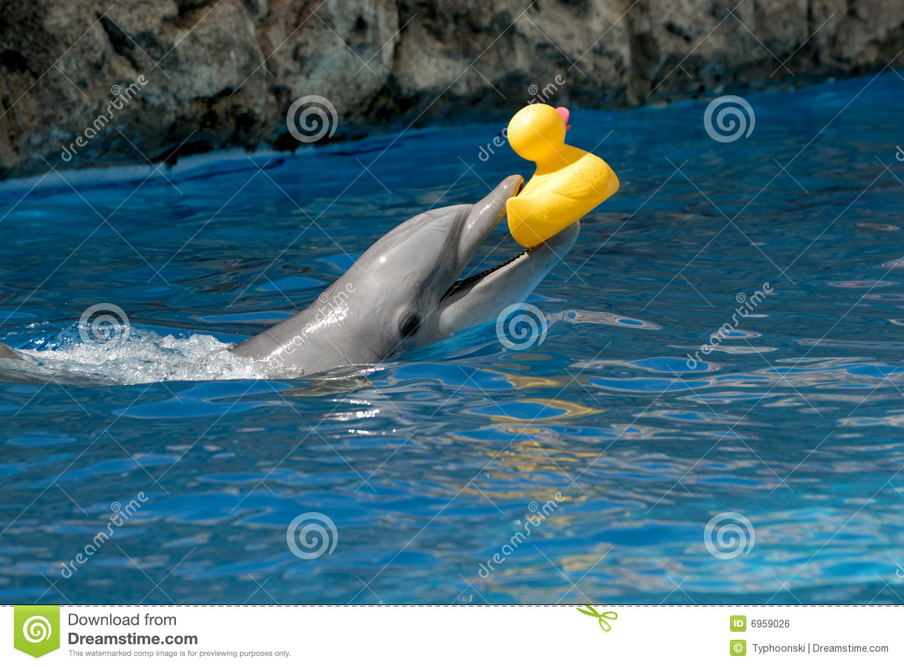 Yellow river dolphin - photo#11