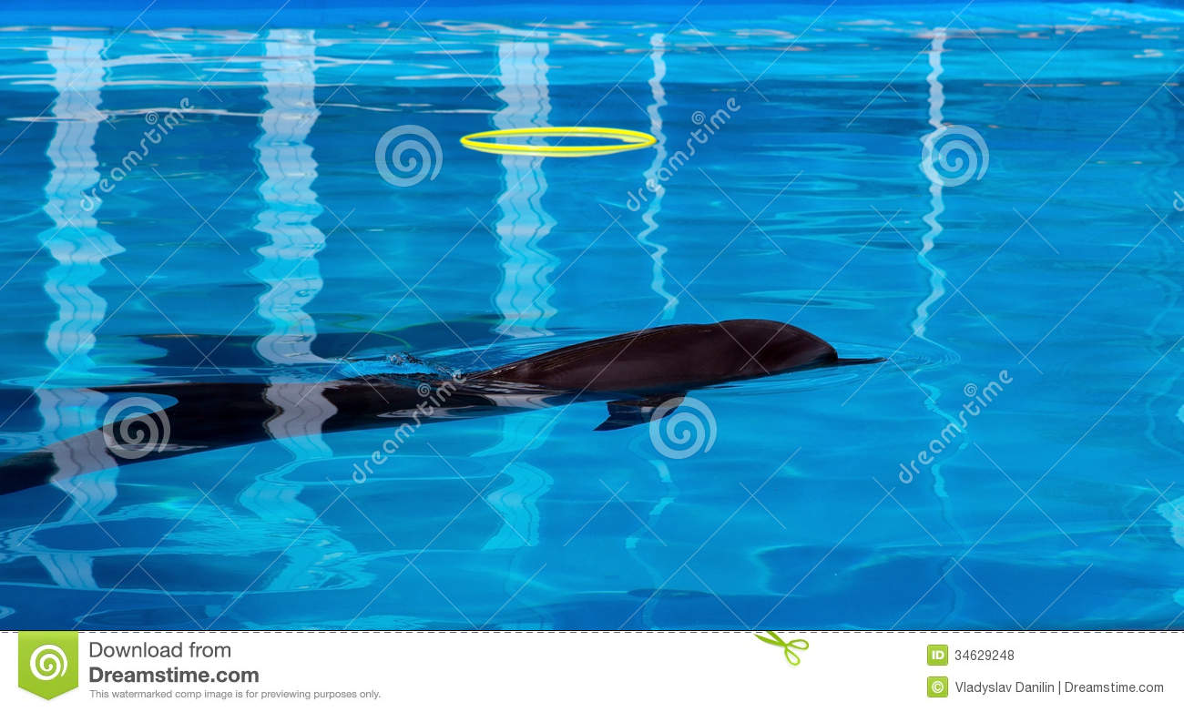 Dolphin Playing Royalty Free Stock Photos Image 34629248