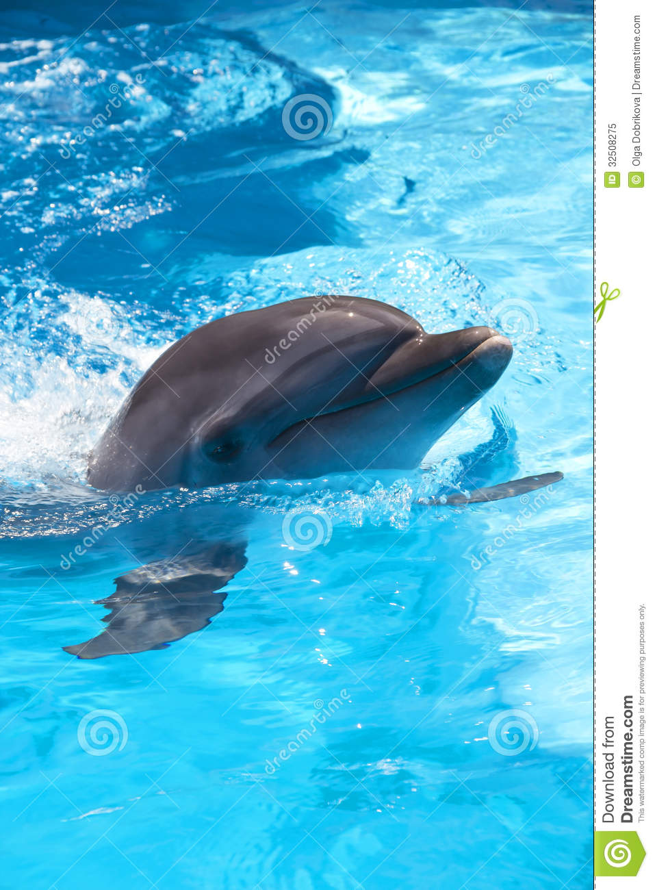 Dolphin In The Pool Royalty Free Stock Photo Image 32508275