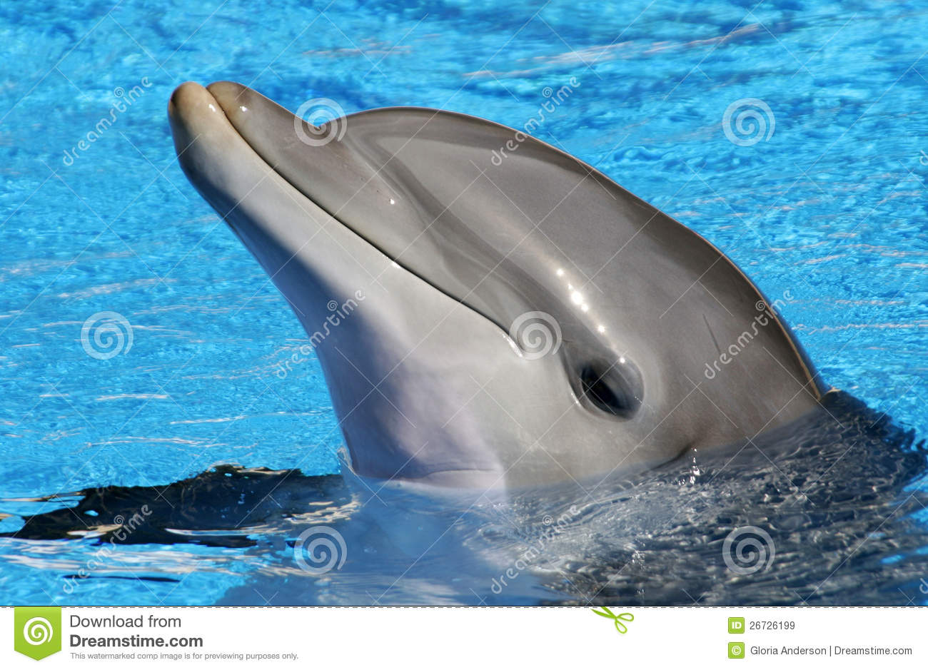 Bottlenose Dolphin Adaptations Cute Bottlenose Dolphins
