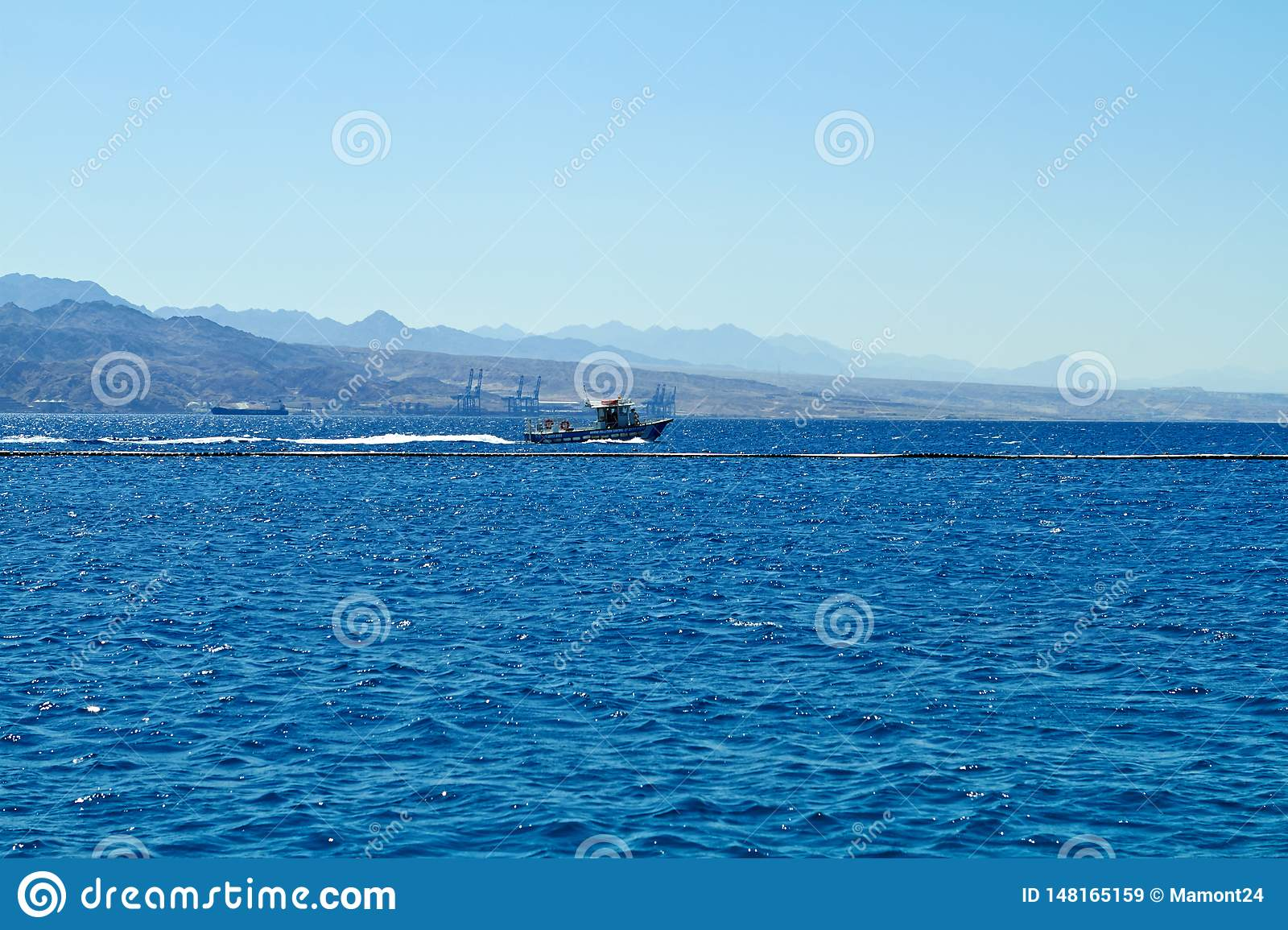 Dolphin reef on the Red Sea