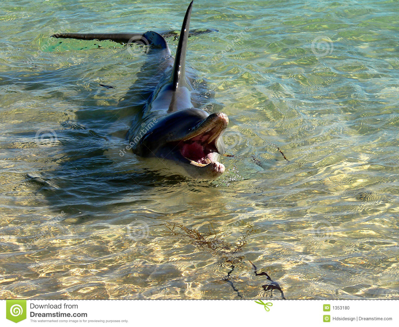 Dolphin In Shallow Water Stock Photo - Image: 1353180
