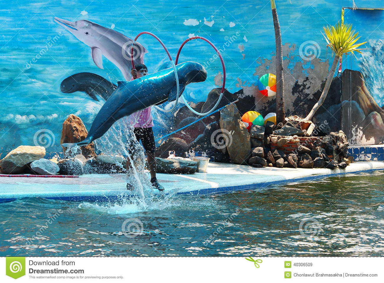 Dolphin Show Editorial Stock Image Image 40306509