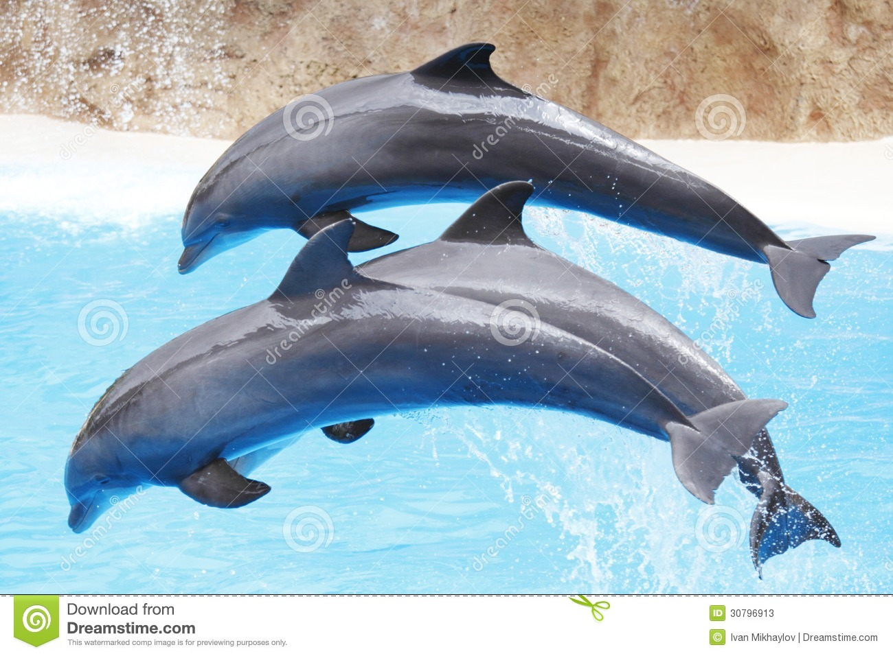mr dolphin show