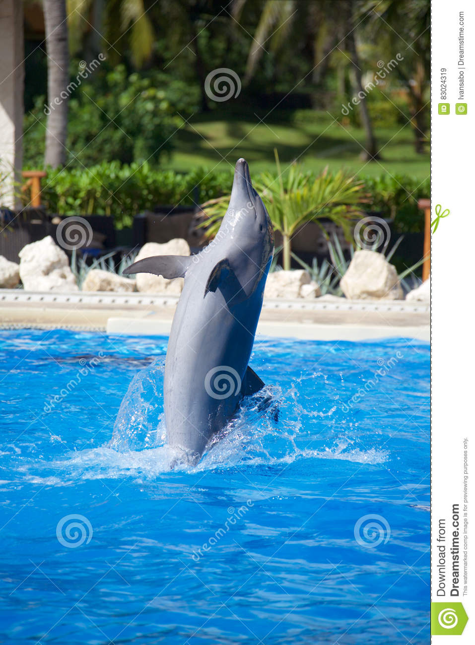 Dolphin show stock image  Image of trick, marine, pool