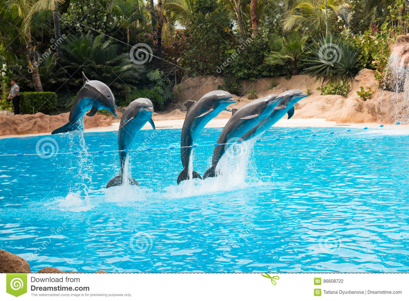 Dolphin Show In The Loro Parque Which Is Now Tenerife S Second Largest Attraction With Europe S
