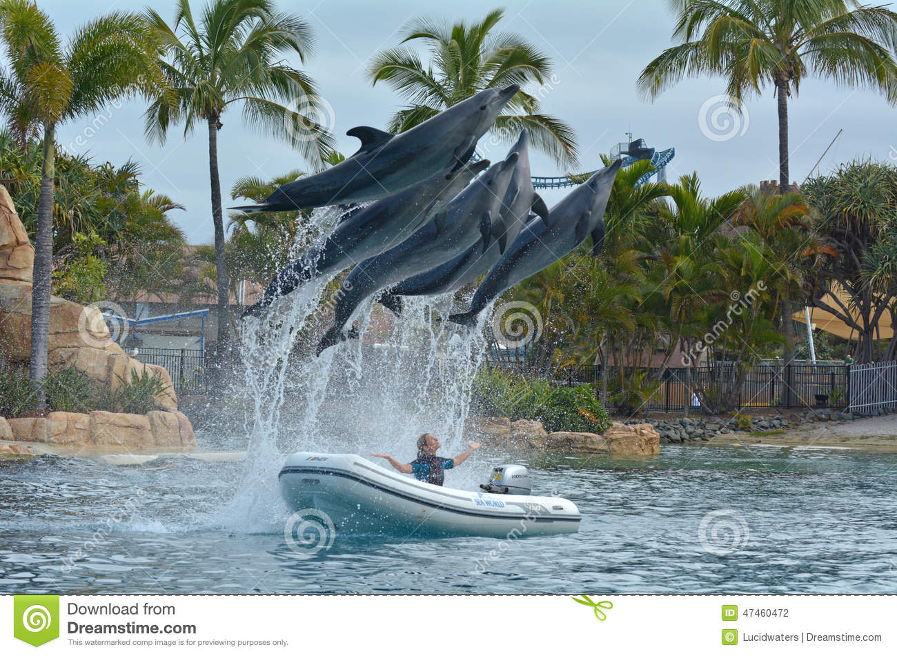 Dolphin Show In Sea World Gold Coast Australia Editorial Photography ...