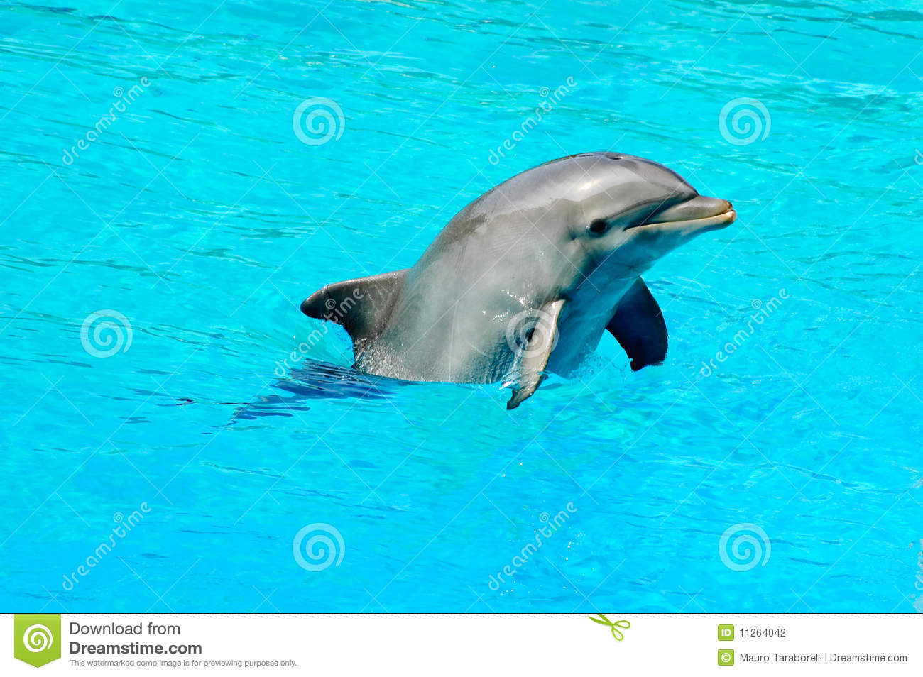 Dolphin swimming in a pool stock photography image 11264042 for Poole dolphin swimming pool prices