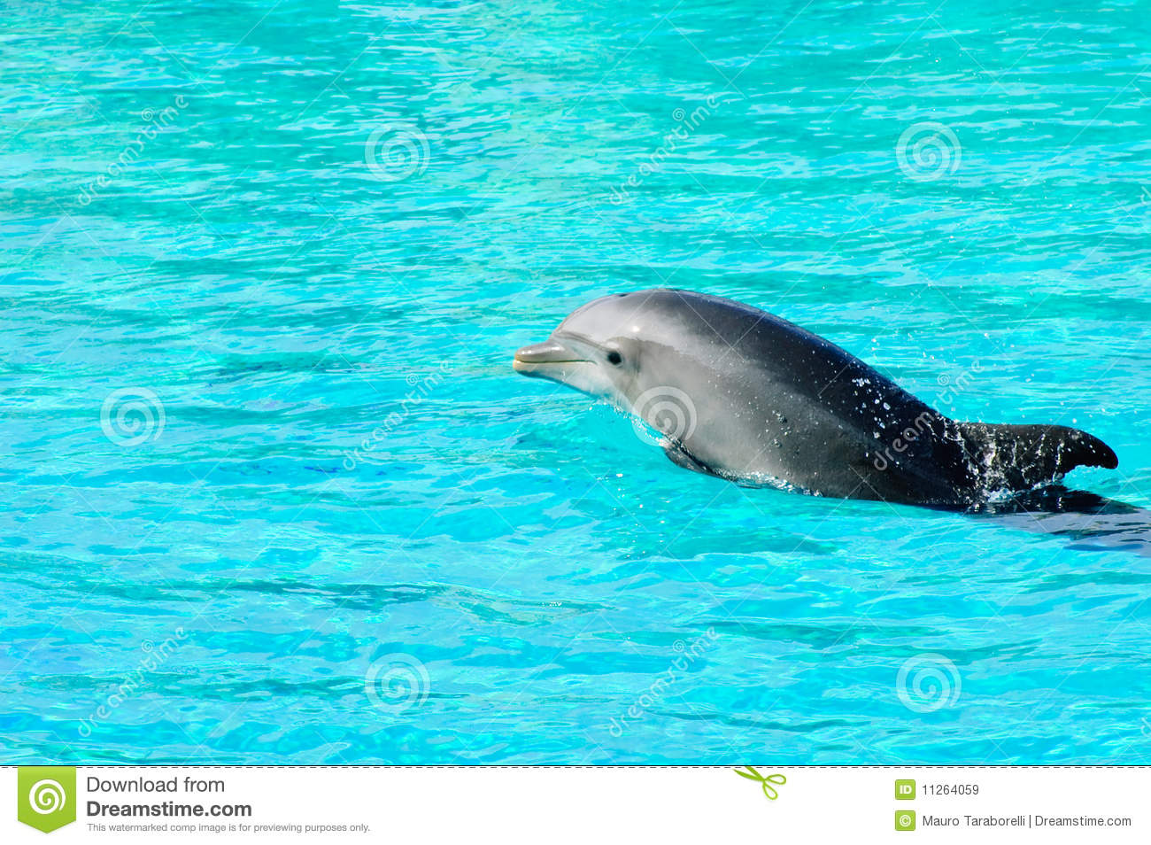 Dolphin swimming in a pool royalty free stock images image 11264059 for Poole dolphin swimming pool prices