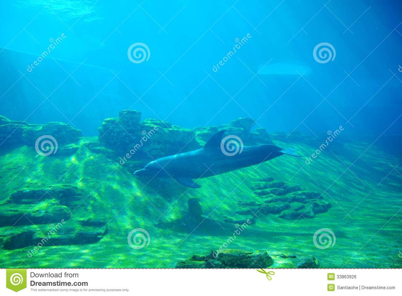 A Dolphin Royalty Free Stock Image Image 33863926