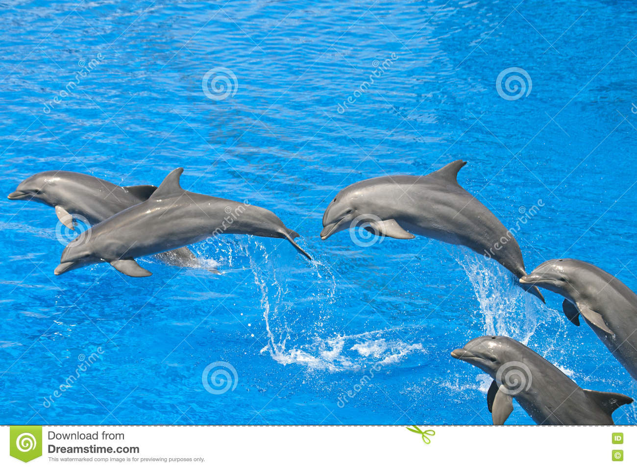 Dolphin in swimming pool stock image. Image of dolphin ...