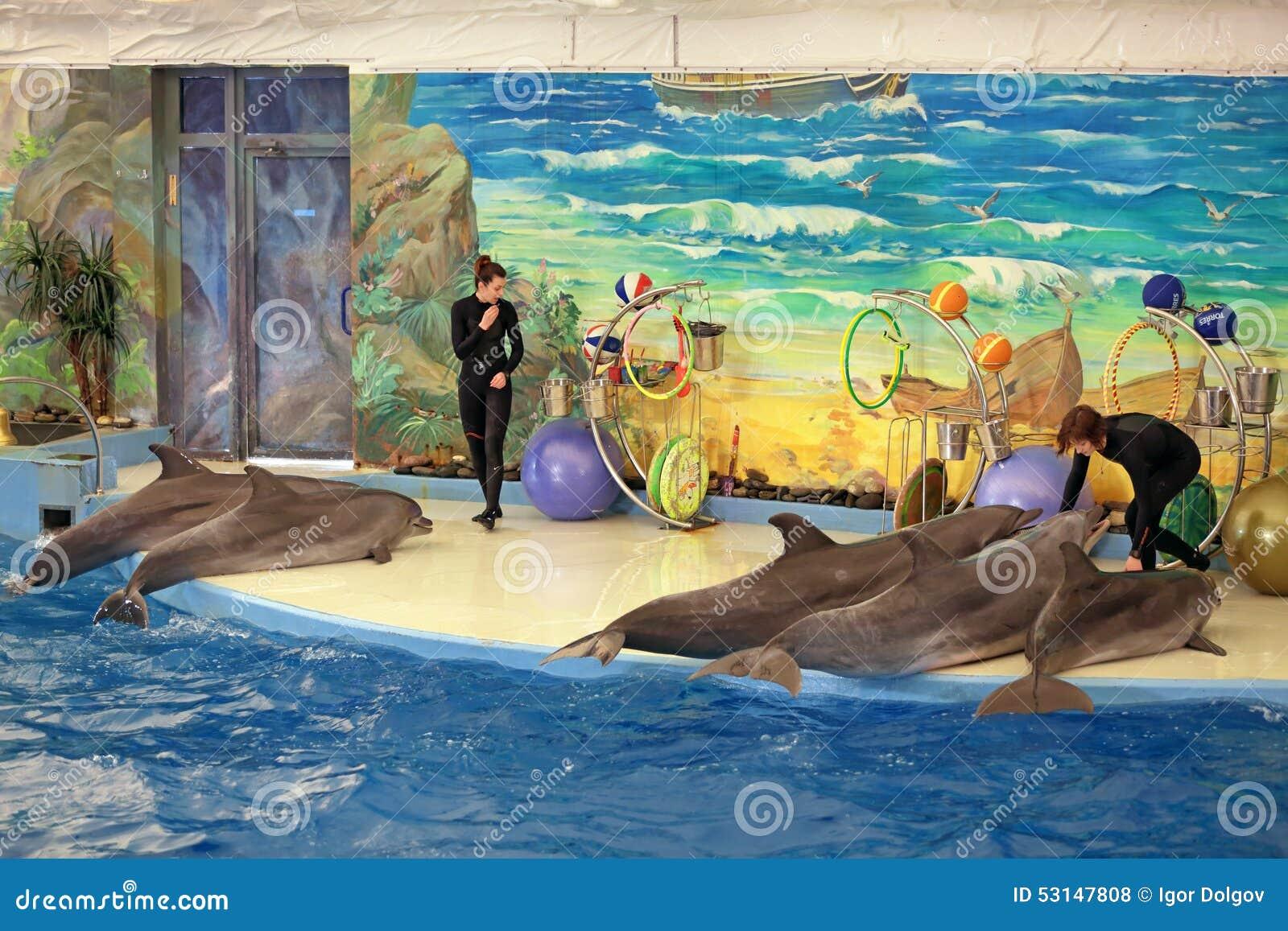 dolphin goggles  dolphinarium
