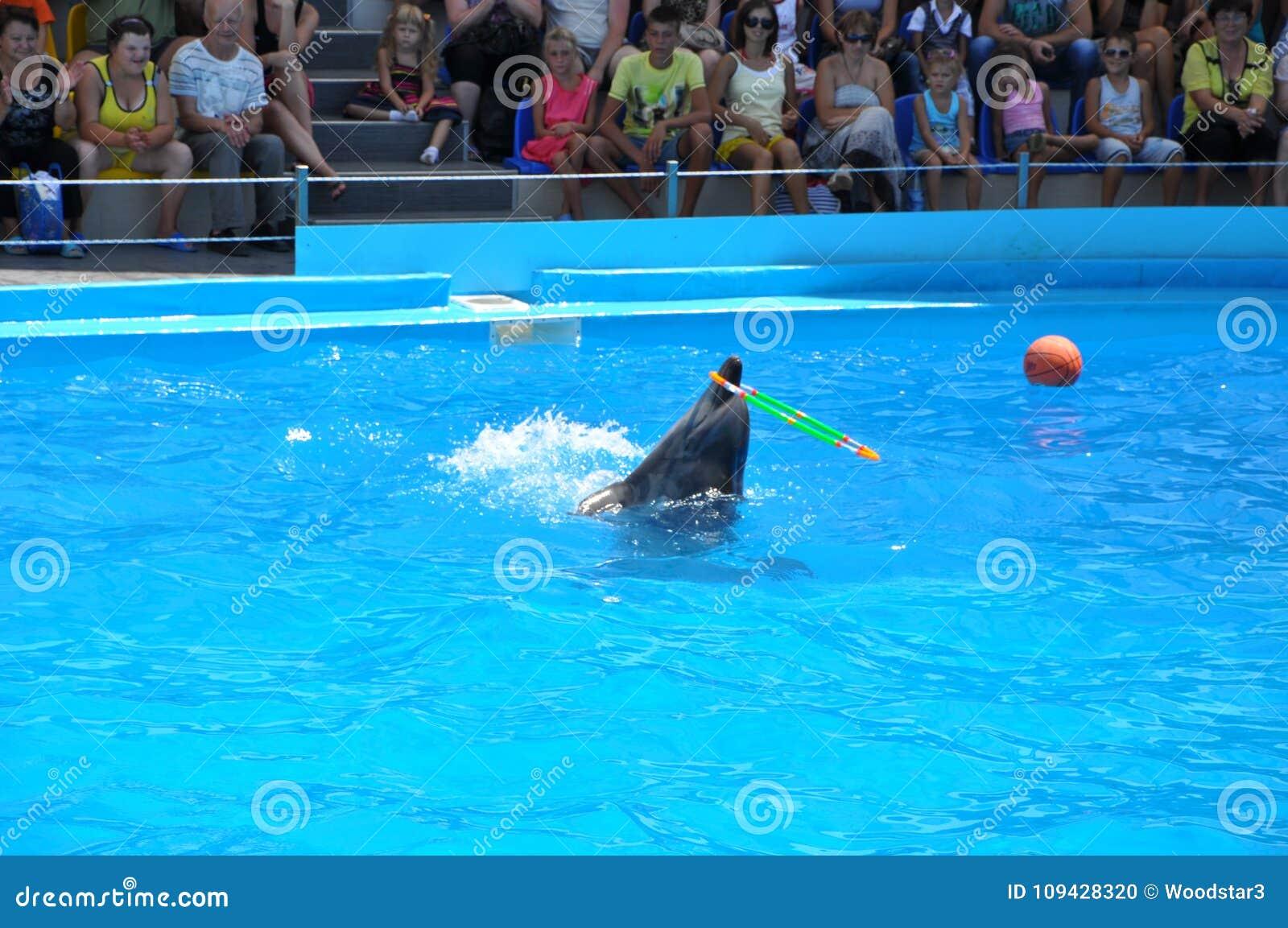 Dolphinarium Nemo - demostración excelente de la noche Tuve gusto odessa ucrania