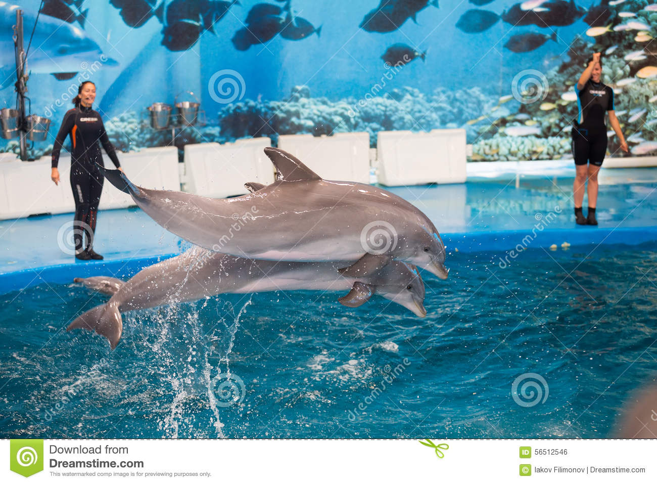 Dolphinarium Show With Dolphins In Zoo Of Barcelona Editorial