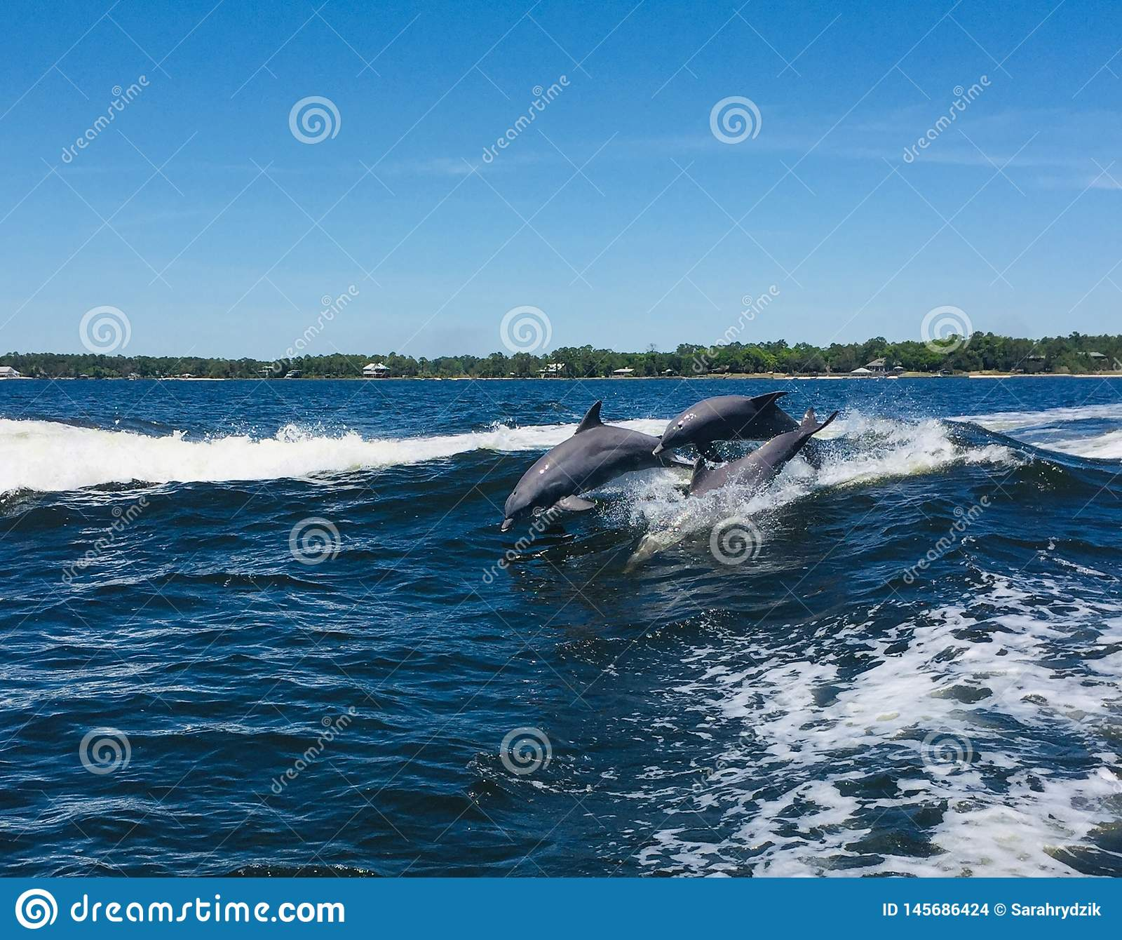 Dolphins having fun in the waves