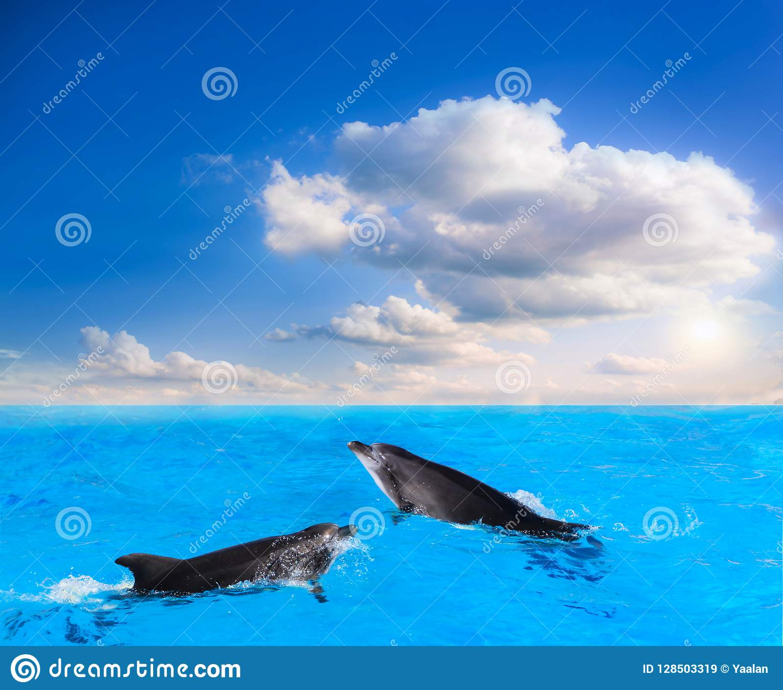 Dolphins Jumping . Beautiful dolphin jumping from shining water
