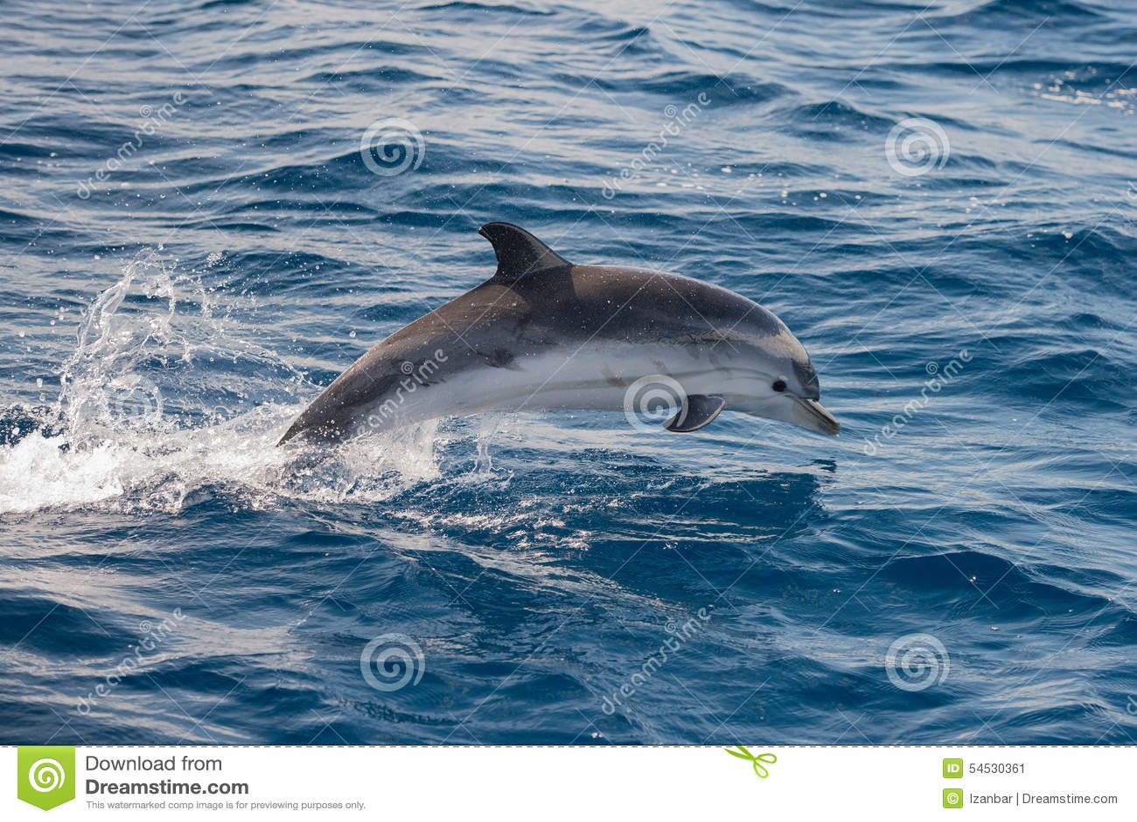 from Jalen deep sea dolphin dildo