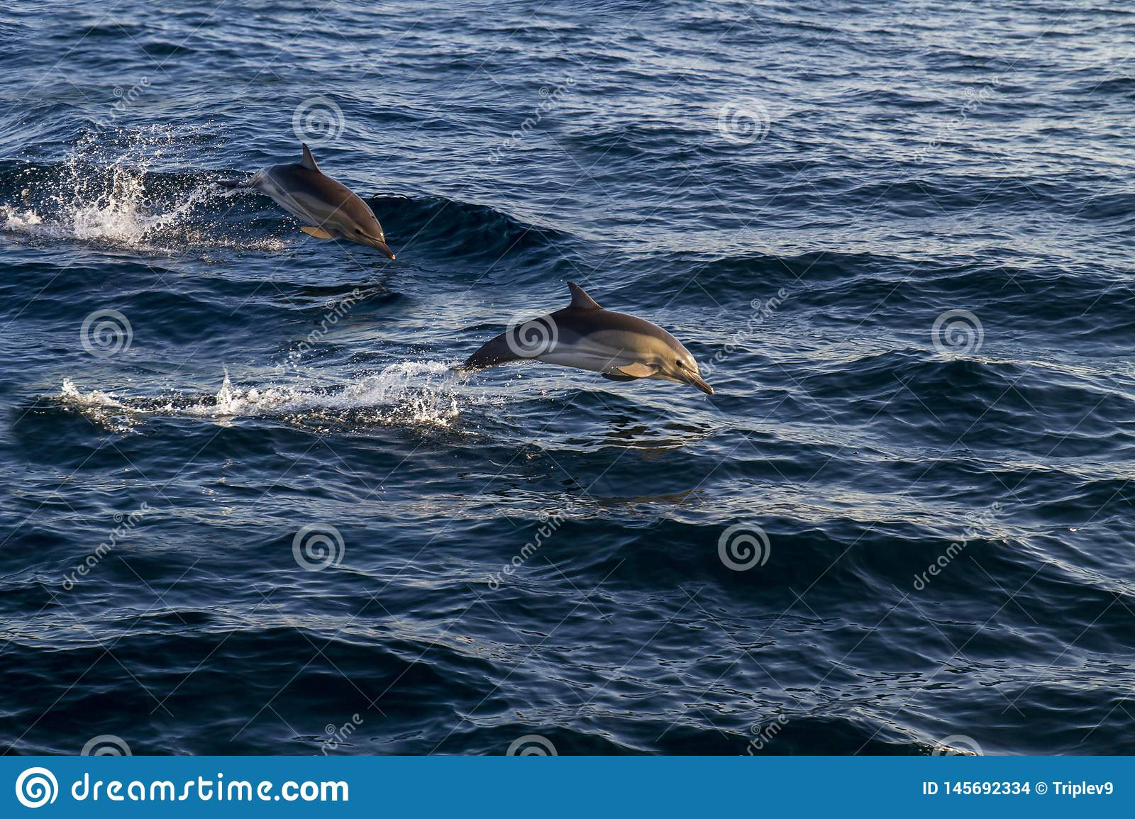 Dolphins jumping over the waves.