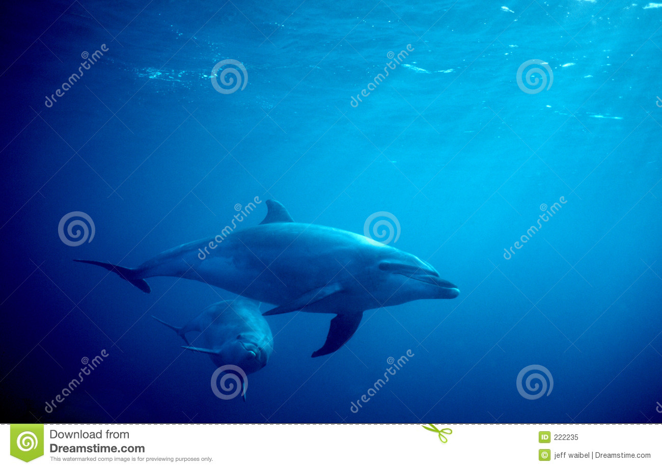 Dolphins ocean two