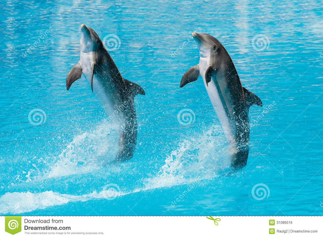 Dolphins Royalty Free Stock Image Image 31086516