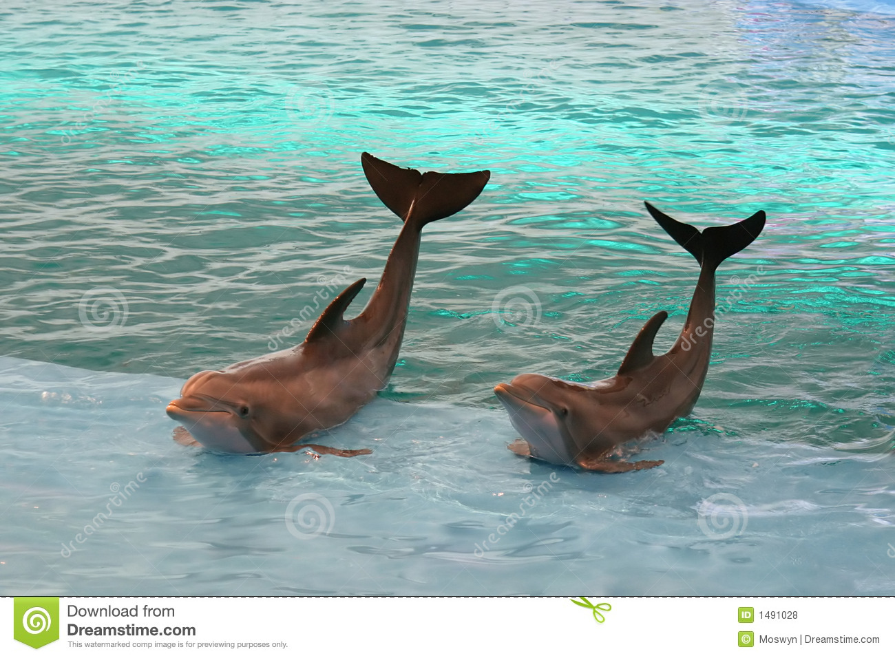 Dolphins Waving Royalty Free Stock Photos Image 1491028