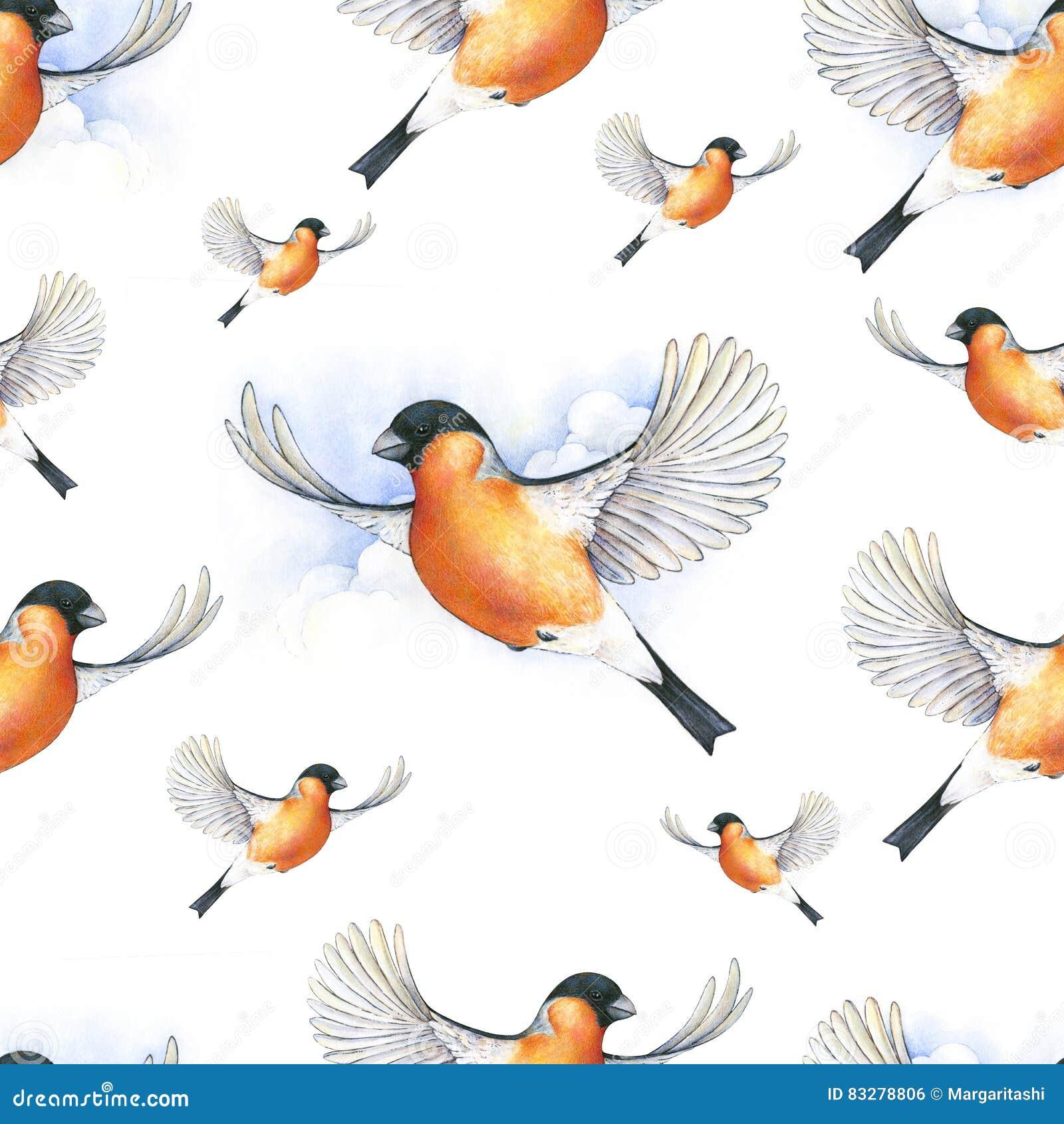Dom-fafe da aquarela Pássaro bonito do inverno com a plumagem cinzenta e róseo que sobe nas nuvens